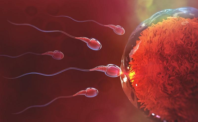 Womens Health Getting Pregnant Fertility